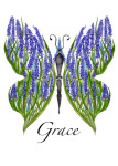 Hyacinth Grace Butterfly