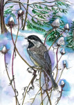 chickadee for website