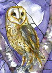 winter barn owl2 card